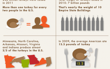 Turkey & Travel (Infographic)