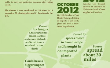 How is Ash Dieback Affecting Our Forests? (Infographic)
